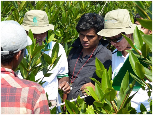NGO participants measuring mangrove species after finding a plot ©2013 NEWS-India, D. Chatterjee