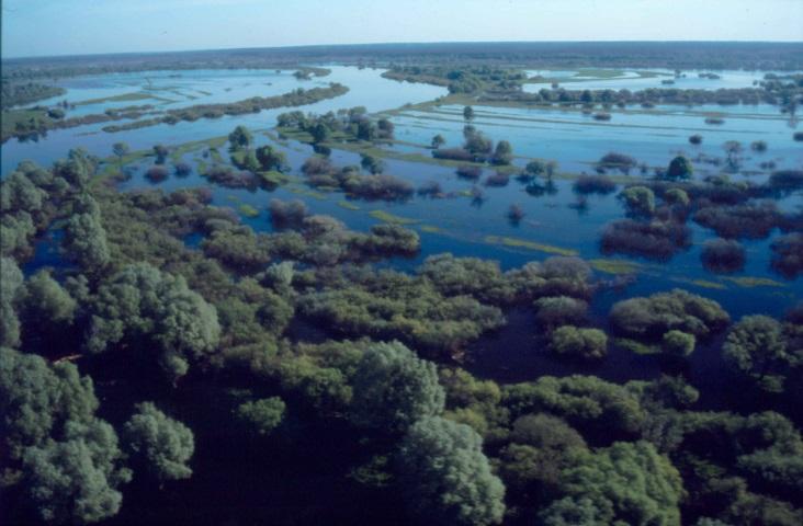 Dnieper river floodplain