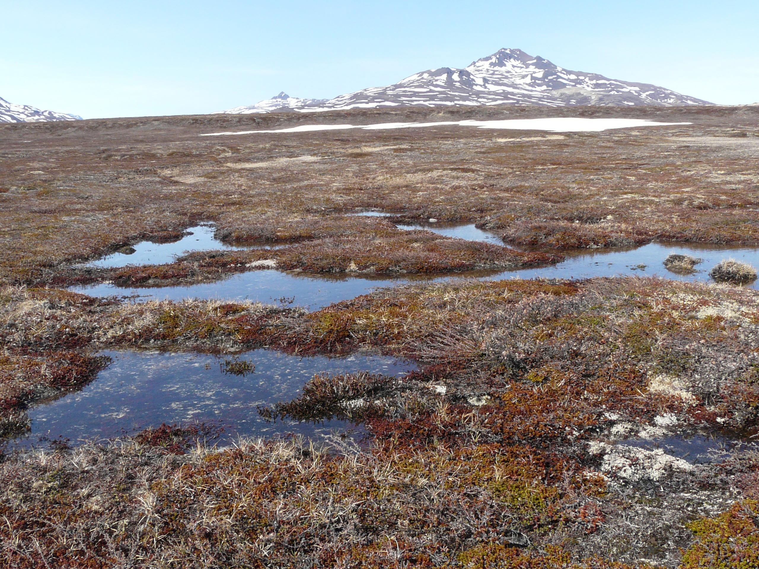 картинка арктические почвы акцент при