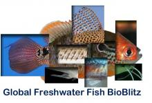 World Wetlands Day 2014 Fish BioBlitz Article