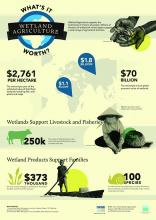 World Wetlands Day 2014 IWMI Infographic