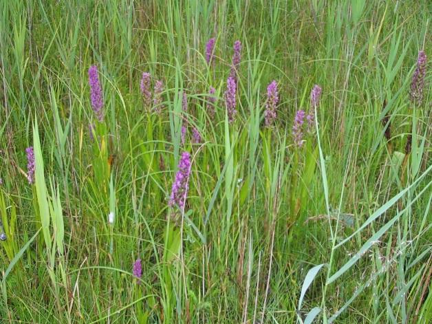 Flora of Vileity