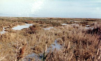 Small River Wetland Project (Great Marsh) Essay
